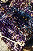 Purple Lobster Trap
