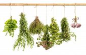 Hanging Bunches Of Fresh Spicy Herbs Isolated On White
