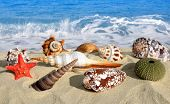 Conch shells with starfish on beach
