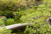 Small stone bridge in Japanese garden