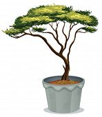 Illustration of a potted plant bonsai