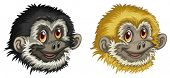 Illustration of two gibbon faces