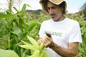 Organic farming: portrait of an eco farmer showing corn beside the field
