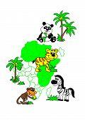 in Africa live tiger Zebra monkey Panda