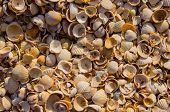 The sun rises on a pile of shells