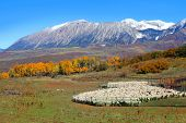 Sheep farm near Kebler pass in Colorado