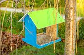 picture of nesting box  - Green wooden bird nest box - JPG