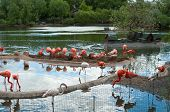 Pink Flamingo In The Moscow Zoo. Russia