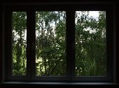 Window In A Dark Room, A View Of The Green Trees.
