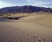 Single track of footsteps in ; Death Valley National Park.  Mequite Flats Sand Dunes