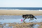 Dog Jumping To Fetch Ball
