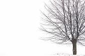 stock photo of lonely  - lonely tree in a snowy winter landscape - JPG
