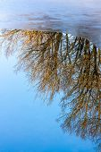 Reflections, Trees And Ice