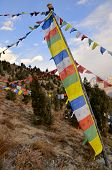 picture of himachal pradesh  - Picturesque view of colorful Buddhist flags hanging over trees in Himachal Pradesh India