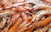 Prawns And Shrimps For Sale In Fish Market In Italy