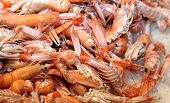 Prawns And Shrimps In The Ice For Sale In Fish Market In Southern Italy