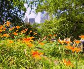 Central Park flowers Manhattan New York US