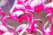 Pink Flamingos Statue