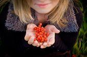 Red rowan berries in the hands