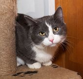 White And Gray Cat Sitting On Scratching Posts