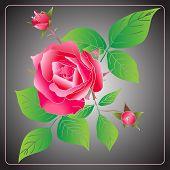 Vector Stencil Roses