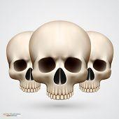 Human tree skulls isolated on white