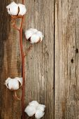 cotton organic plant buds closeup wooden background top view