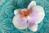 Beautiful orchid on blue background