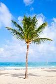stock photo of atlantic ocean beach  - Coconut palm tree growing on a sandy beach - JPG