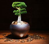 Green tree growing in ceramic pot full of coins on wooden table on dark background
