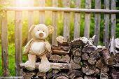 Teddy bear on the bench
