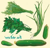 Vector Set With Scallions, Dill, Parsley, Cucumbers