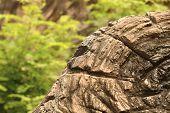 Tree Stump In The Wild