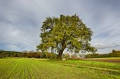Hdr Shoot Of A Lime Tree On A Field In Autumn