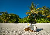 Opened Coconut On The Sandy Beach Of Tropical Island