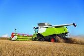 combine harvester grain harvest