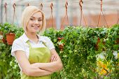 picture of apron  - Beautiful young woman in apron keeping arms crossed and looking at camera while standing in a greenhouse - JPG