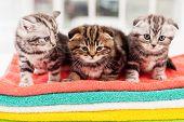 Three Curious Kittens