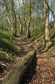 pic of hollow  - Steep track in Cotswold ancient woodland Hollow Combe Dursley - JPG