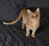 Ginger Kitten Sitting On Quilted Bedspread
