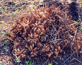 image of fern  - Fern growing in the Botanical Garden - JPG