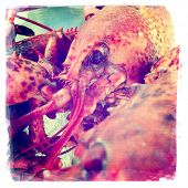 stock photo of lobster  - instagram style image of a boiled lobster close up - JPG