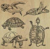 foto of freehand drawing  - TURTLES  - JPG