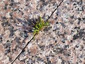 Grass On Marble