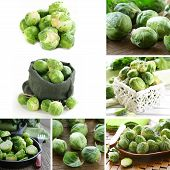 picture of brussels sprouts  - collage of natural organic green brussels sprouts - JPG