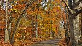 image of vivid  - A wooded road in Eastern Pennsylvania - JPG