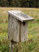 Eastern Blue Bird Box
