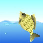 stock photo of freshwater fish  - Freshwater Fish Swimming in the Blue Water - JPG