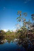 picture of rainforest  - Beautiful landscape in Panacocha lagoon Rainforest nature - JPG