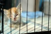 stock photo of inhumane  - injured kitten rescuednow resting in a cage stop animal cruelty bekind to all animals - JPG